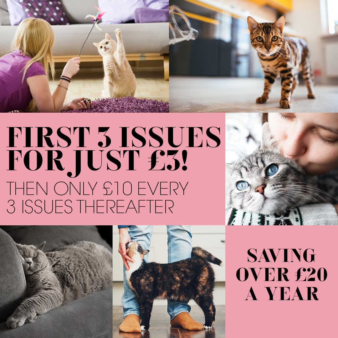 Your Cat magazine promo code discount