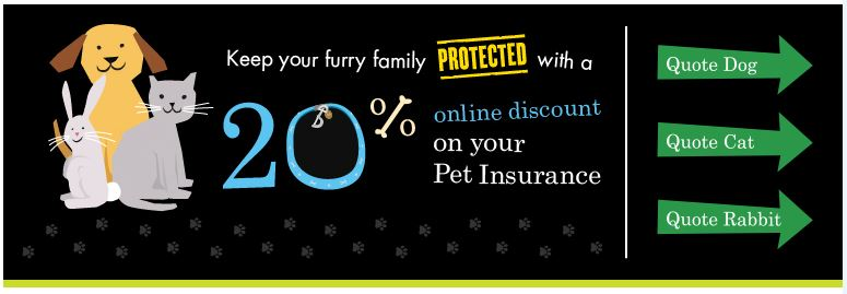 American Express Pet Insurance 20% discount review