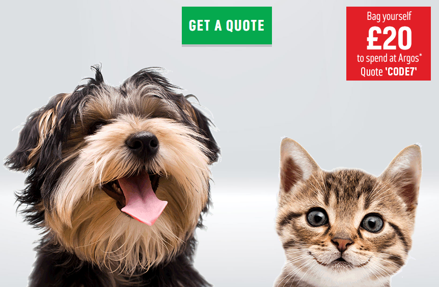 """Our Top Five Pet Insurance Providers """"Who is the best pet insurance provider?"""" is a question that you will often see asked on various pet forums or on social media."""