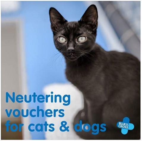 Free Cat Neutering Vouchers Uk