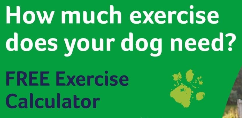 Dog Exercise Calculator