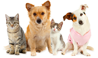 Freebies and discounts for Cats and Dogs