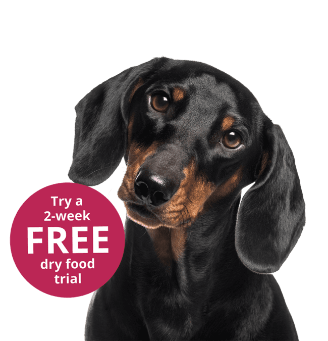 Kasper & Kitty 2 week free dog food trial
