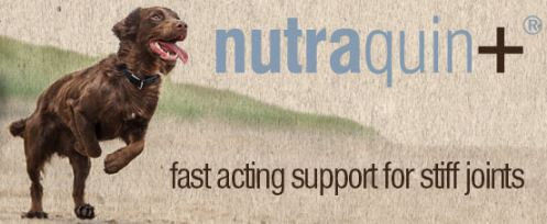 Fast acting dog joint supplement