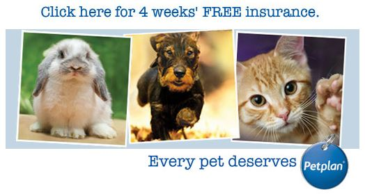 Pet Plan 4 weeks free insurance trial